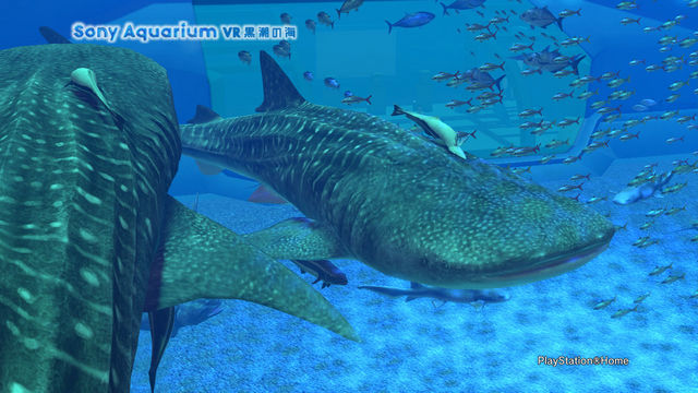 Sony Aquarium VR 黒潮の海.jpg